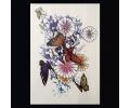 XL Tattoos Kleur tattoo voorbeeld Dieren 115 Vlinders en Bloemen