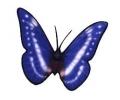 Vlinders tattoo voorbeeld Vlinder 1