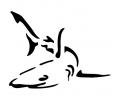 Roofdieren tattoo voorbeeld Haai