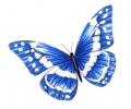 Vlinders tattoo voorbeeld Vlinder Blauw