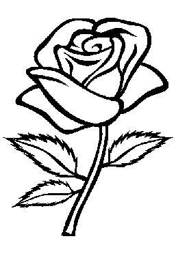 Roos zwart-wit
