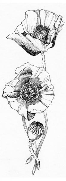 Bloemen grijs 2