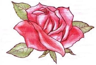 Roos 3