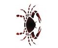 Sterrenbeelden tattoo voorbeeld Kreeft