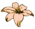 Bloemen tattoo voorbeeld Roze bloem