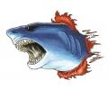 Haaien tattoo voorbeeld Haai 1