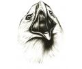 Overige Vogels tattoo voorbeeld Hallo ik ben een Arend