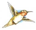 Nieuw!!! Plaktattoos tattoo voorbeeld Hummingbird