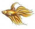 Vissen & Koi Karpers tattoo voorbeeld Japanse Goudvis