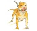 Honden tattoo voorbeeld Pit Bull 1