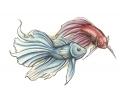 Vissen & Koi Karpers tattoo voorbeeld Vissen Blauw en Rood