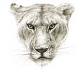 Roofdieren tattoo voorbeeld Wilde Kat 2