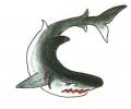 Haaien tattoo voorbeeld Witte Haai