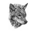Nieuw!!! Plaktattoos tattoo voorbeeld Wolf