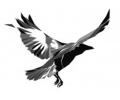 Overige dieren tattoo voorbeeld Kraai