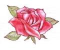 Ben Saunders tattoo voorbeeld Roos 3