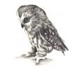 tattoo voorbeeld Uil