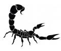 Sterrenbeelden tattoo voorbeeld Scorpio
