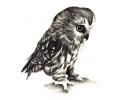 Nieuw!!! Plaktattoos tattoo voorbeeld Uil 1