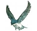 Zwaluwen tattoo voorbeeld Zwaluw tattoo